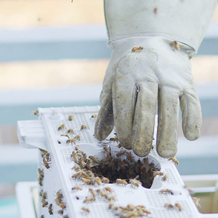 Pollinator Friendly